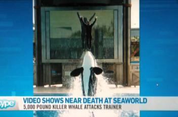 SeaWorld News